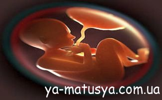 Ступені зрілості плаценти