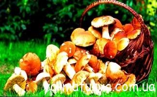 Чи можна вагітним гриби, способи приготування та види грибів